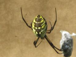 Phobias, Phobias, Phobias......Oh, So Many Phobias...Arachnophobia Etc
