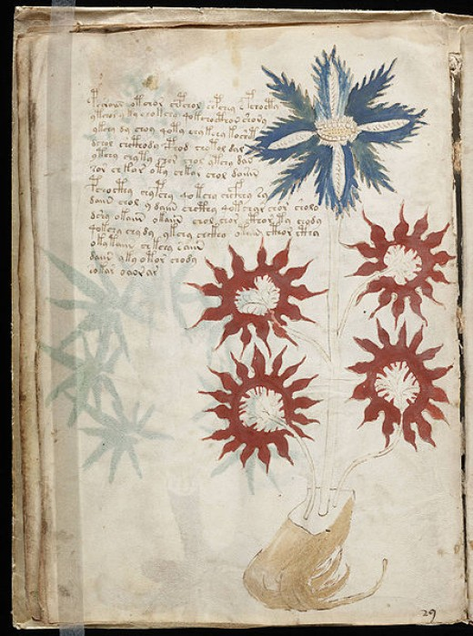 One of the Voynich Manuscript's enigmatic illuminated pages. Source: Public domain, via Wikimedia Commons