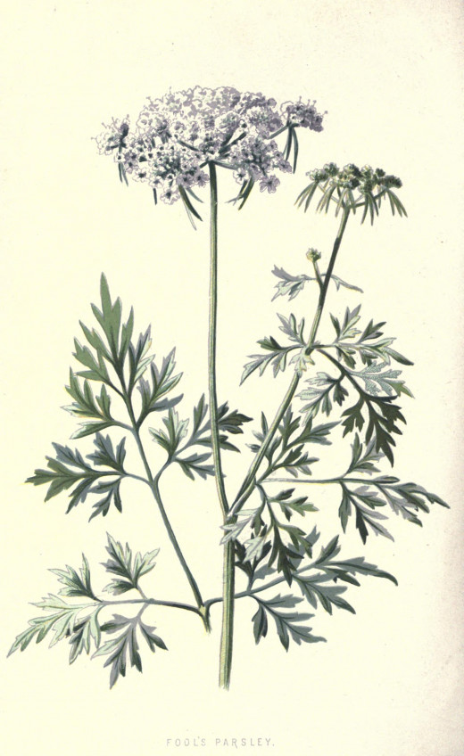 Familiar Wild Flowers { 1878}