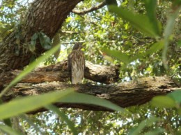 What will happen to the hawks and the trees?