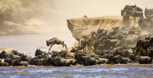 Photo Taken During The Great Serengeti Migration.