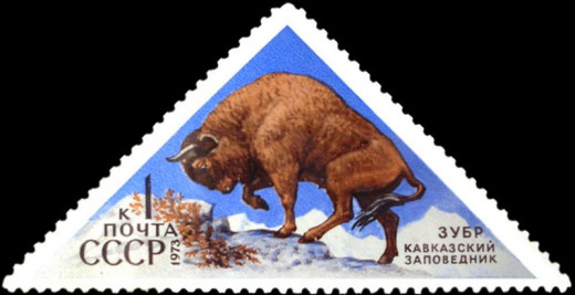 A bison in the Caucausus Nature Preserve near Sochi. The Western Caucausus here are a UNESCO National Heritage Site.