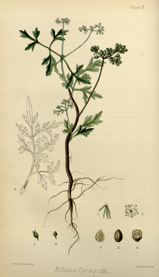 Flora Homeopathica {1852}