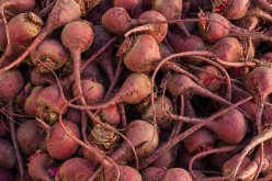 Picture of pulled Beets. These pulled beets are being gather to be washed,cleaned and cooked  And be used to maked favorite dishes that uses beets.