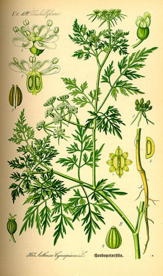 Thome's Flora Public domain