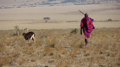 Maasai men can walk for miles and miles looking for water for their cattle.