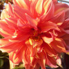 Gladys Familaran profile image