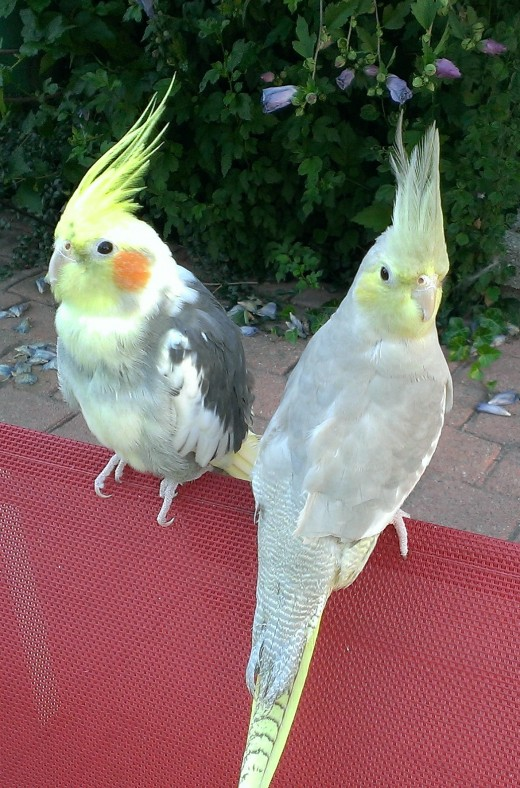 My birds love being outside with me when the weather is warm