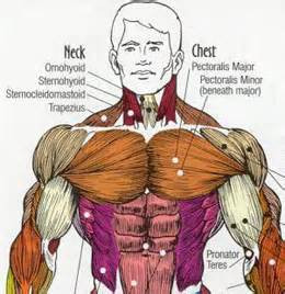 How to develop a chest 31
