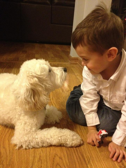 Communicate with your dog - eye to eye.