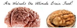 Walnut: Brain Food Extraordinaire
