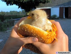 I became a vegetarian because I fell in love with a chicken