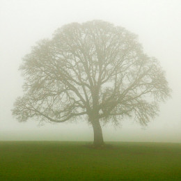 Hope came to Sarah in the mist of the mighty oak