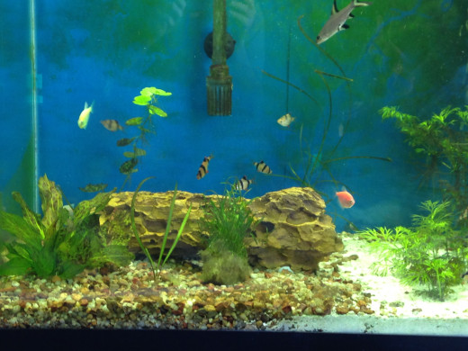 Larger tanks mean more room for schooling fish to swim and, well, school.