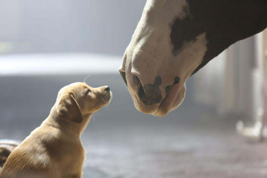 """Best Buds"" Super Bowl commercial by Budweiser. Very, very heartwarming."