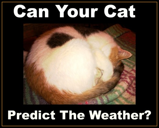Does your cat  forecast weather changes?