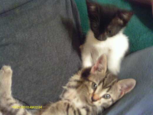 Brother and sister:  Tom and Raisin