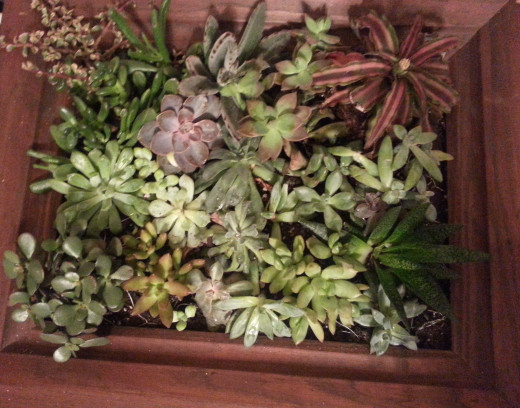 Live Succulent Wall Painting Planter Displayed in Different Lighting
