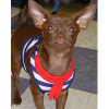 The right stuff for your Chihuahua