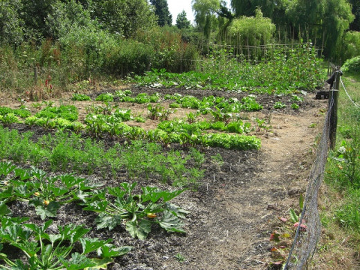 a vegetable allotment