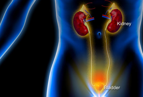 What Are The Signs And Symptoms Of Urinary Tract Infection?