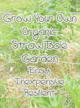 Growing a straw bale garden is simple, fun and a great way to grow organically without a lot of hassle.