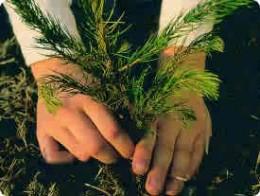 Planting a tree...