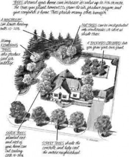 Good tips on placement of trees, so they benefit you and your home...