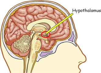 Physical and chemical stimuli also influence the hypothalamus through the blood perfusing it. The supraoptic and paraventricular nuclei respond to these stimuli by the production of hormones vasopressing and oxytocin.