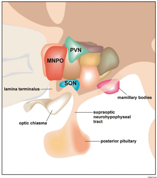 Hypothalamic disorders result from destruction of the neurons which secrete the hormones or from alterations in the afferent impulses from the higher neural centers into the hypothalamus.