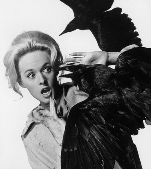 Local residents' irrational fears of birds manifested themselves into a frenzy, as in Alfred Hitchcock's horror film. The Birds (pictured).