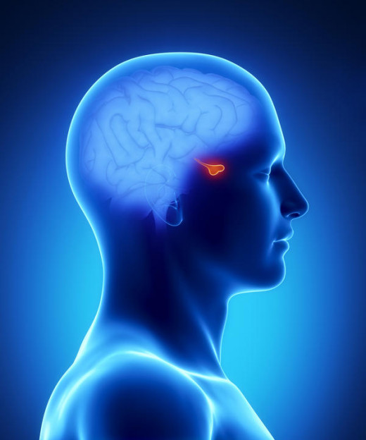 Excessive activity of the pituitary hormones may result from several causes such as Defective regulatory control by the hypothalamus, tumours of the pituitary and ectopic secretion of pituitary hormones.
