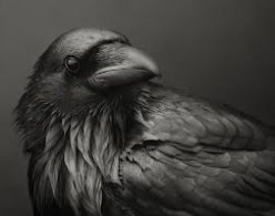 The Raven and its Symbolic Meaning