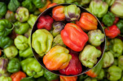 Sweet Peppers Companion with Sweet Basil