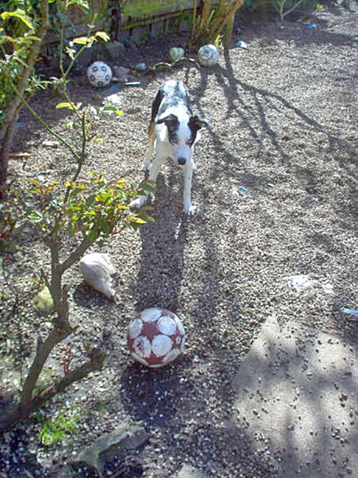 If Blue lost sight of his ball mid-flight, it took him longer to find it, as he couldn't hear it thud on to the gravel.