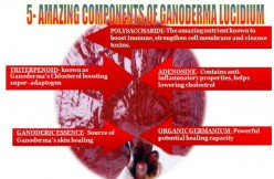 5 Amazing Components of Ganoderma and  benefits