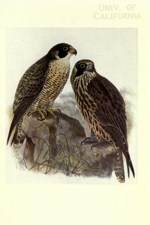 Birds of Britain { Bonhote} 1907