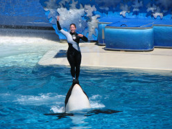 What's Wrong With SeaWorld: The Captivity of Killer Whales