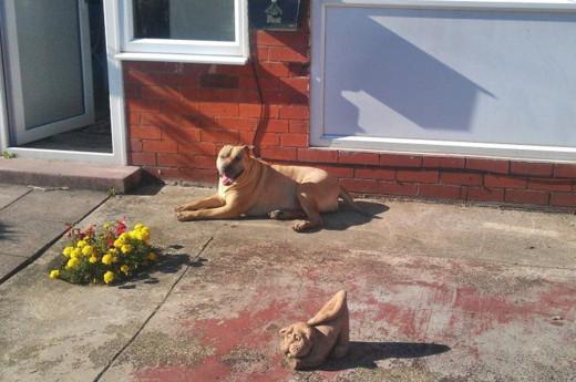 Millie enjoying the sunshine in the front garden.