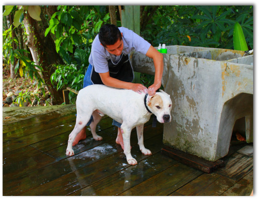 Bath time for El Tortugal's property manager and guest liaison, Jeffe.