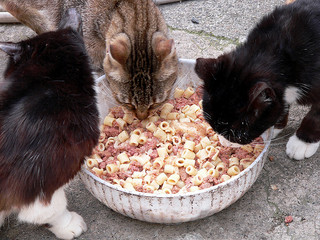 Don't give your cat home cooked food rich in carbohydrates!