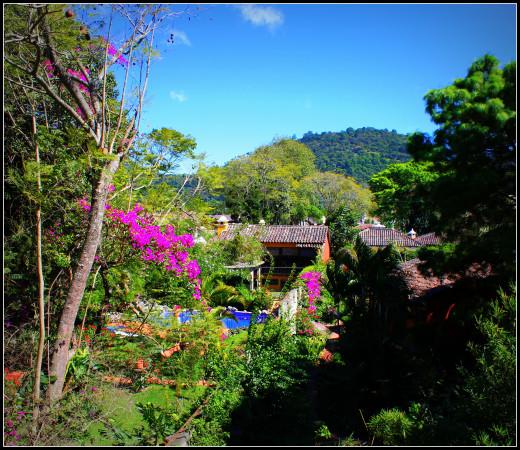The school's gardens