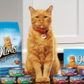 Celebrity Cats - A Trivia Quiz