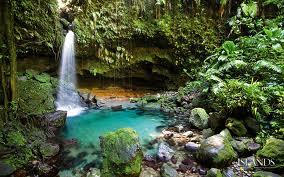 Rainforest in Dominica.