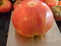Usually showing more yellow, everyone of these bicolor Hillbilly tomatoes looks a little different.