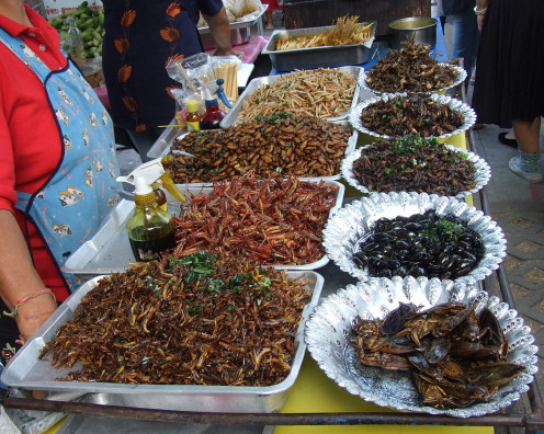 A food stall in Thailand where fried insects are sold. You can have hot sauces and hot oils as condiments. The insects are cooked with garlic and chillies.