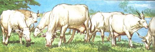 Pharaoh's Dream Seven Healthy Cows