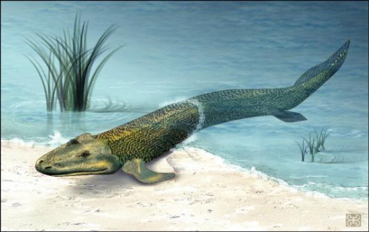 Tiktaalik rosae, a transitional form between fish and amphibians.