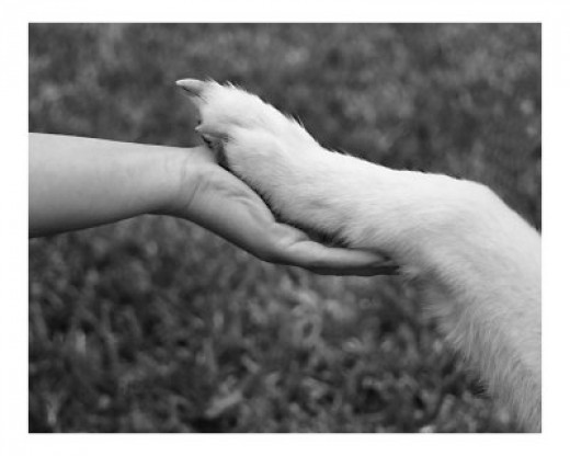 Everyone needs a helping hand...including animals!