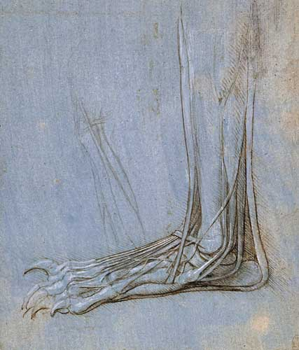 Leonardo da Vinci had wide and varied interests